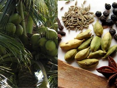 coconut_spice